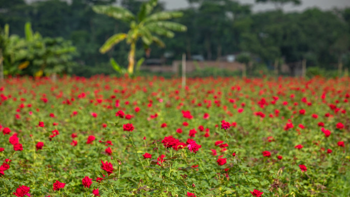 rose_village_sadullapur-bangla_vibe.jpg