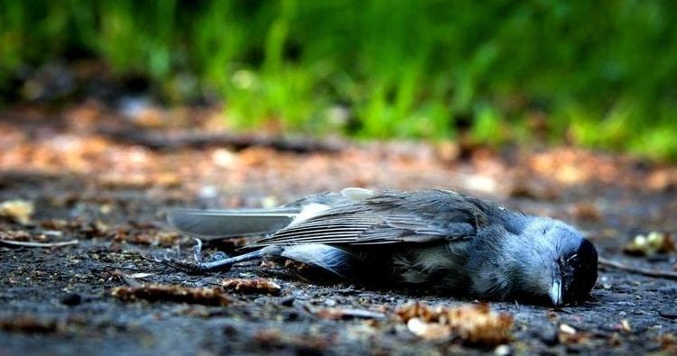 mysterious-village-jatinga-where-birds-commit-suicide